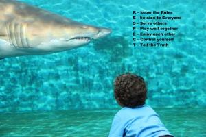 shark respect