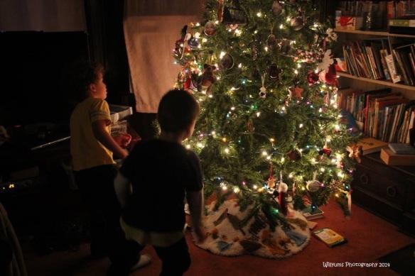 boy tree_wp