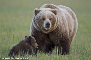 mama bear2